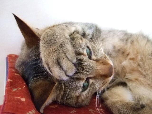 動物 猫2